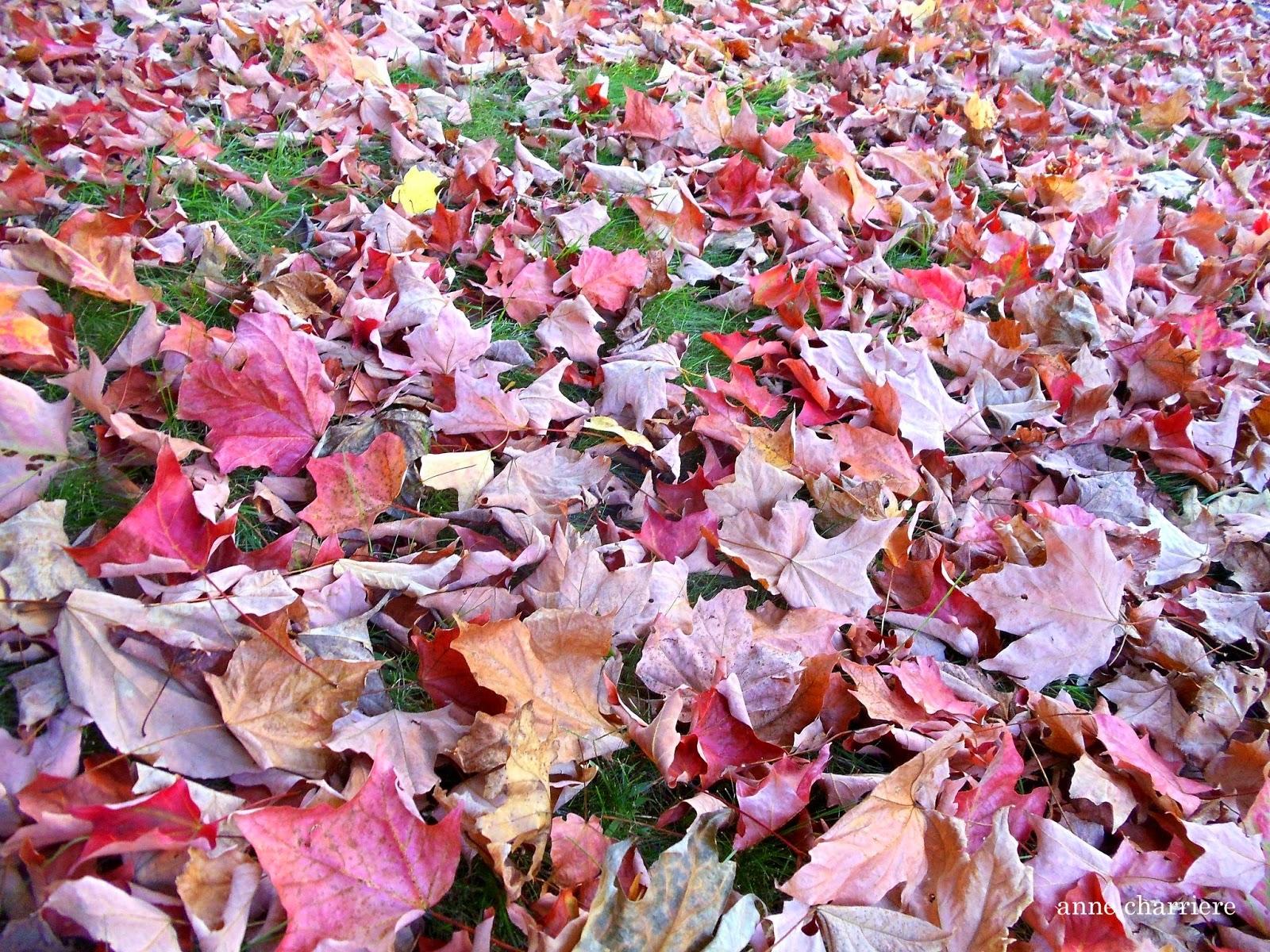 annecharriere.com, cambio de color de las hojas, colores de otoño,