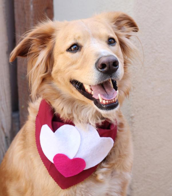 heart dog bandana