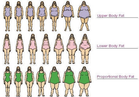 average body fat for women № 79583