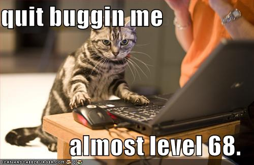 funny cat picture - funny cat pictures-funny-pictures-your-cat-is-almost-level-68