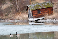 Boathouse Geese