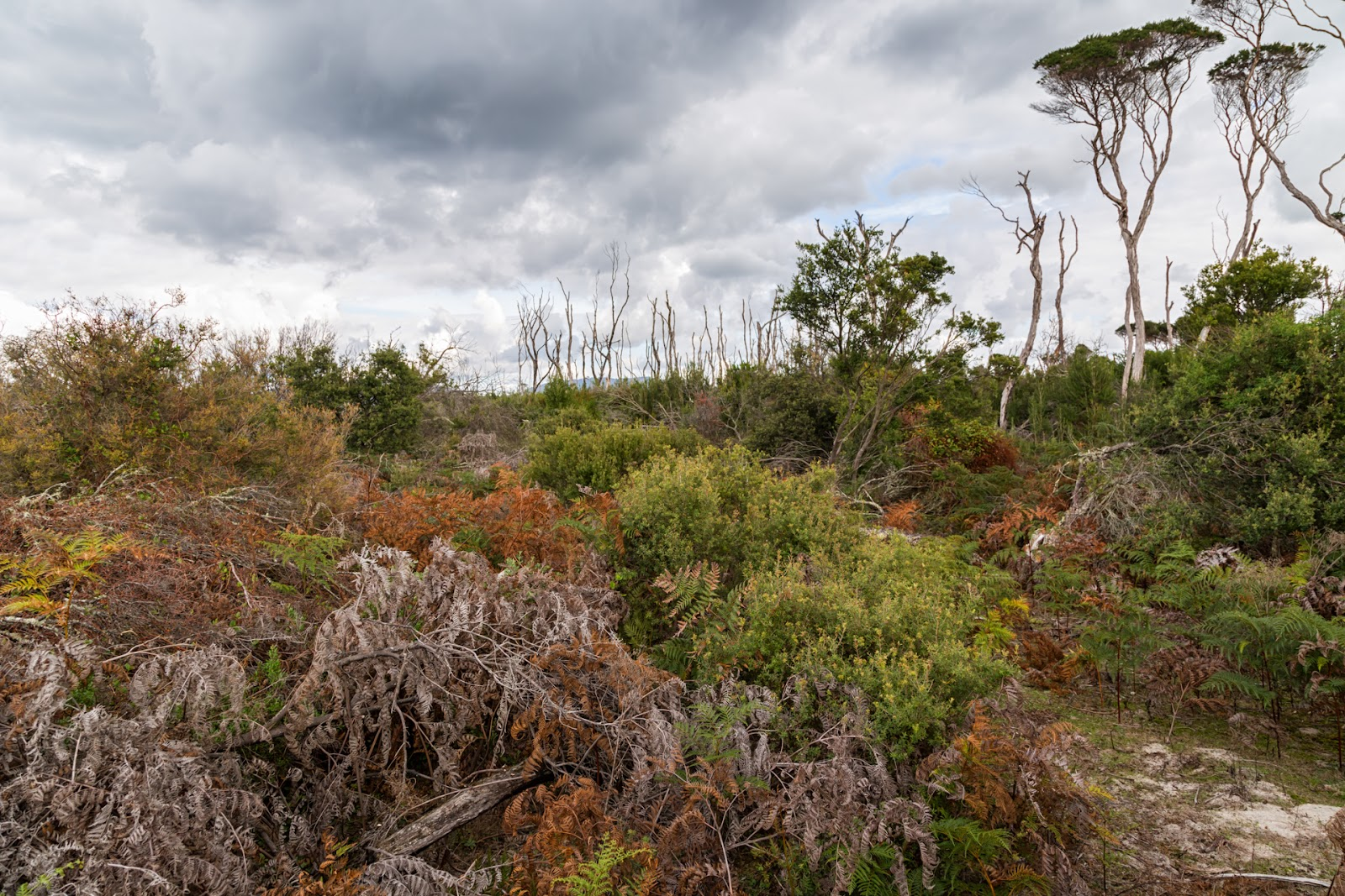 wilderness scrub north wilsons promontory