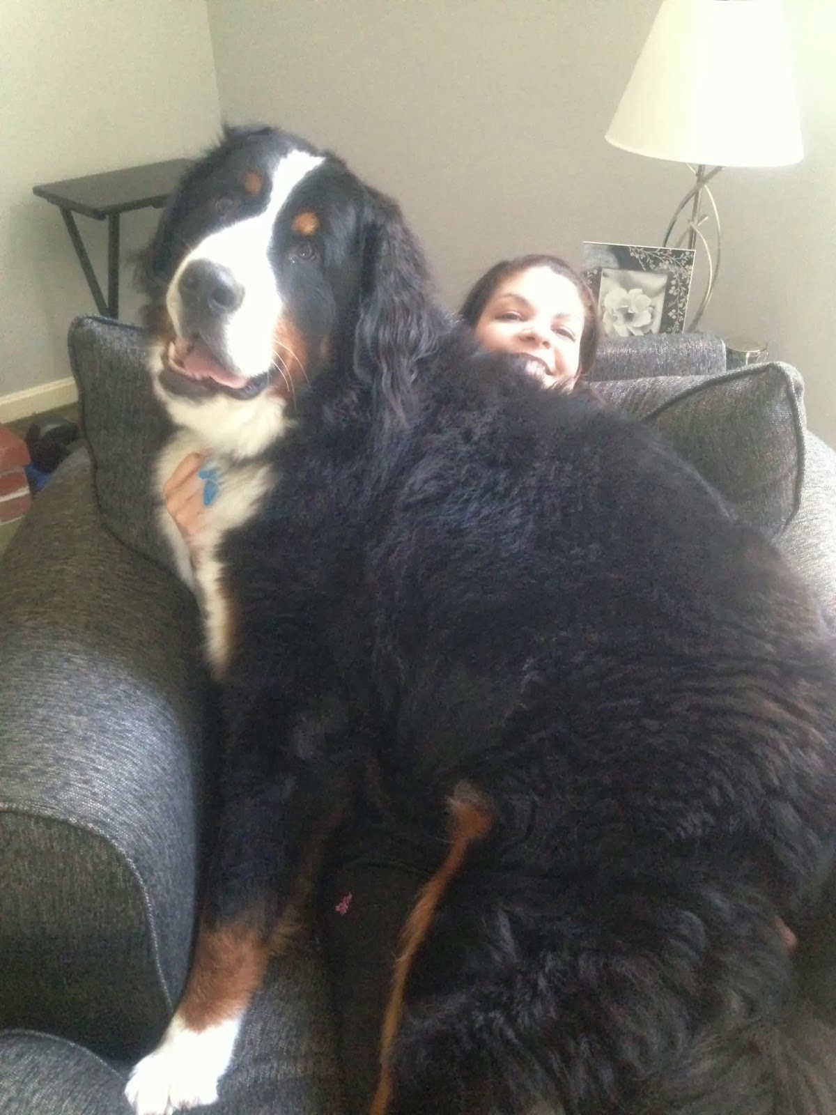 Cute dogs - part 6 (50 pics), a big dog sits on girl lap