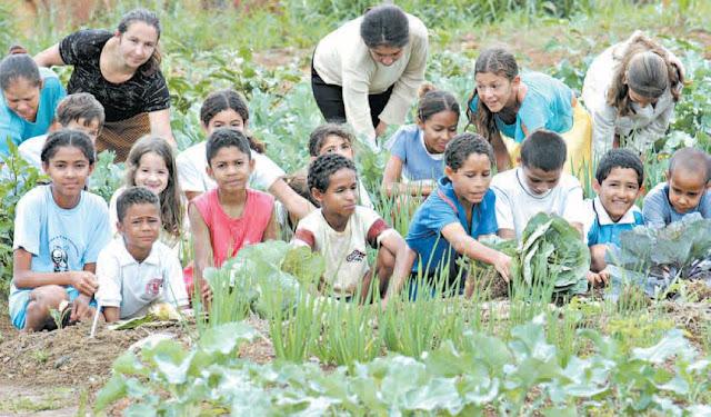 Horta Comunitária: exemplo de superação da comunidade da Quadra 12