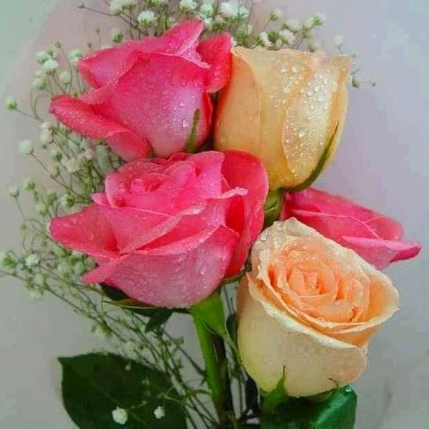 light pink yellow love rose image