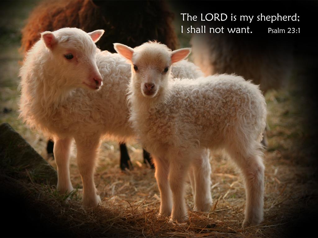 http://1.bp.blogspot.com/-laIZnyEbPHo/ThGR85z56dI/AAAAAAAAAYI/r4u62R6lbjY/s1600/lambs.jpg