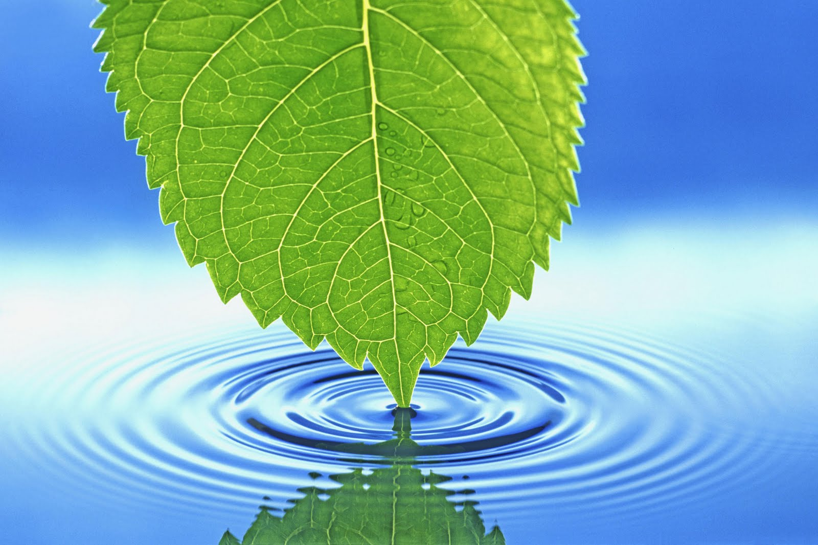 Nature Wallpaper : Leaves  on water