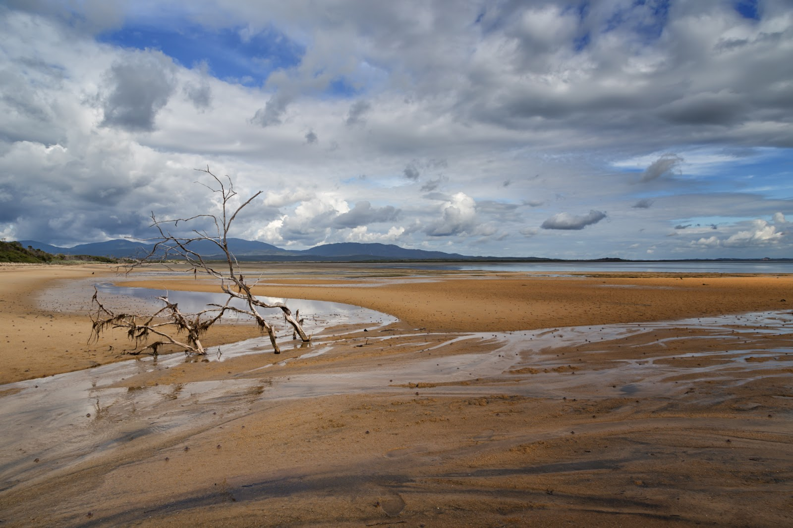 tree branches chinaman long beach wilsons promontory