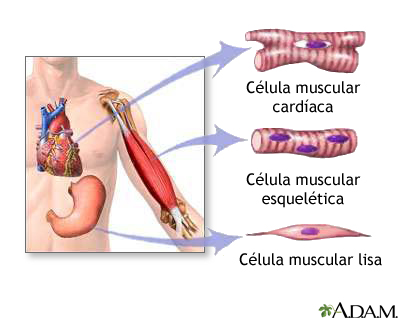 ANATOMÍA Y FISIOLOGÍA I - UI 1: El músculo esquelético