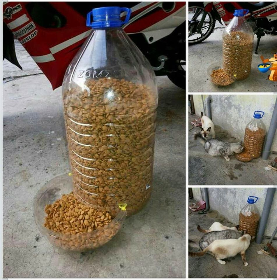 how to make flavored water for cats