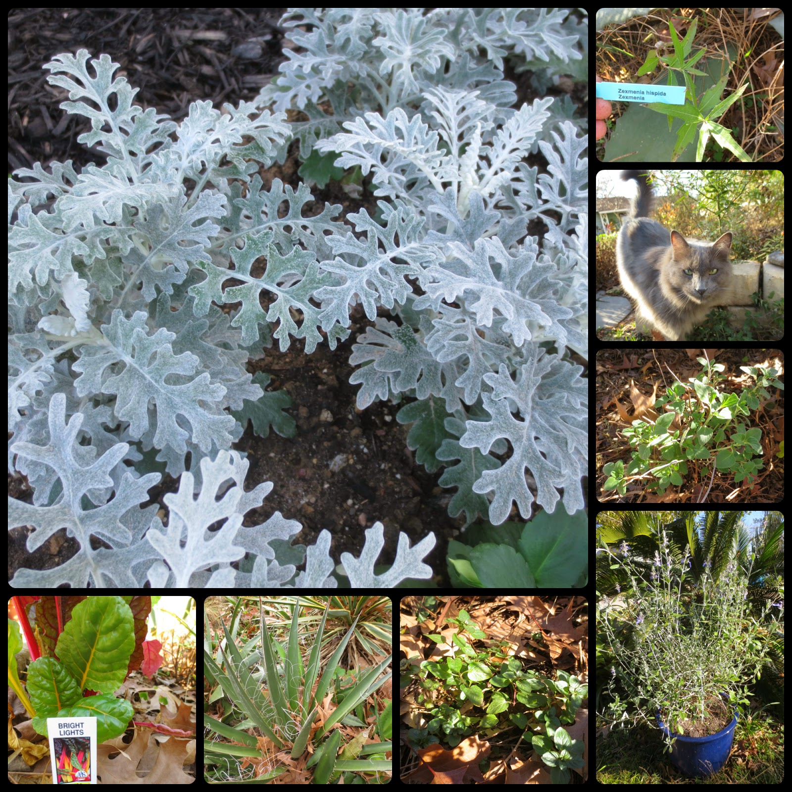 tropical texana texas cottage garden 50 plants that look good