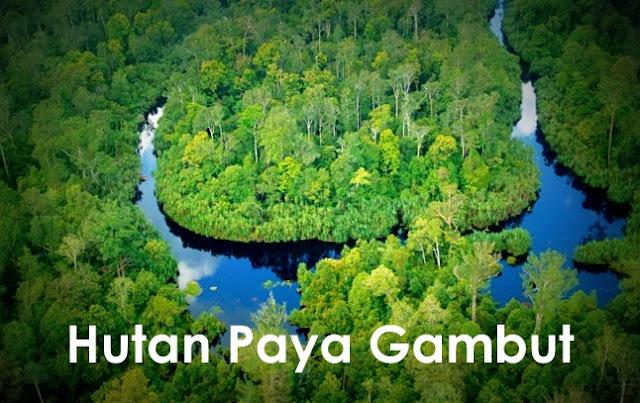 Hutan Di Malaysia - Hutan Paya Gambut