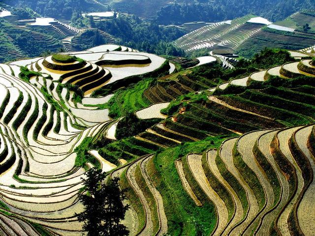 Longji Terraces