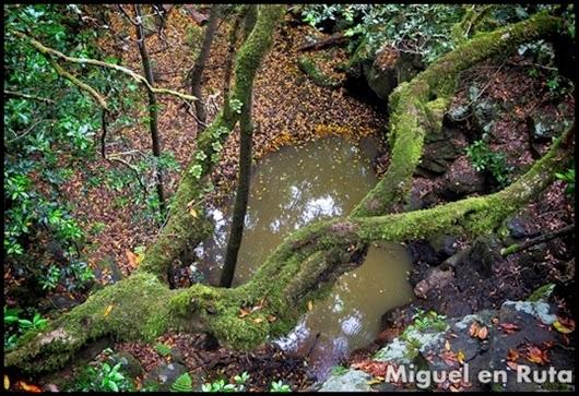 Parque-Nacional-De-Garajonay-La-Gomera