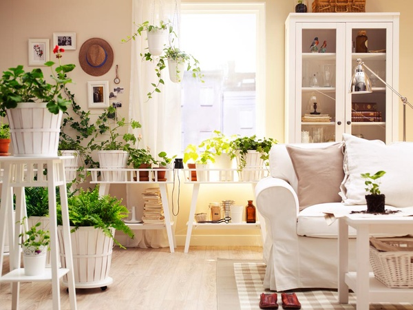 house plant display