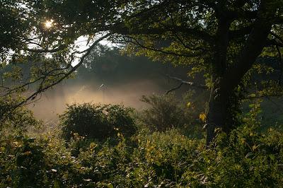 Ashumet Holly Widlife Sanctuary