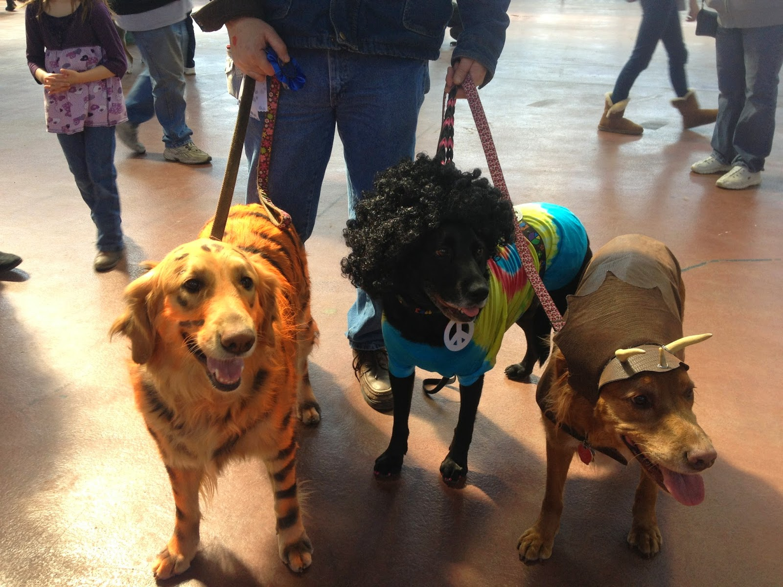essays on service dogs Analysis of the discrimination against service animals essays service animals perform a wide variety of services and tasks for people with disabilities, and many disabled people would not be able to function effectively without their animals.