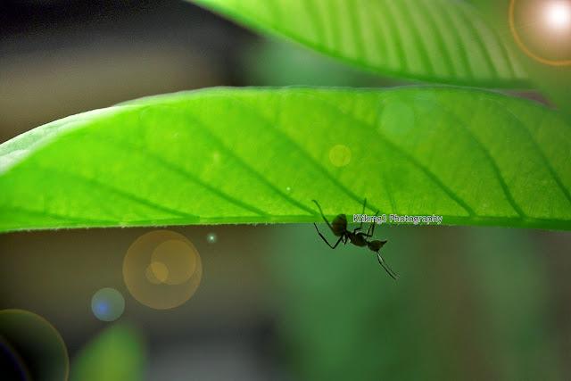 Serangga Photo Shoot || Fotografer : Klikmg3 ( Fotografer Purwokerto )