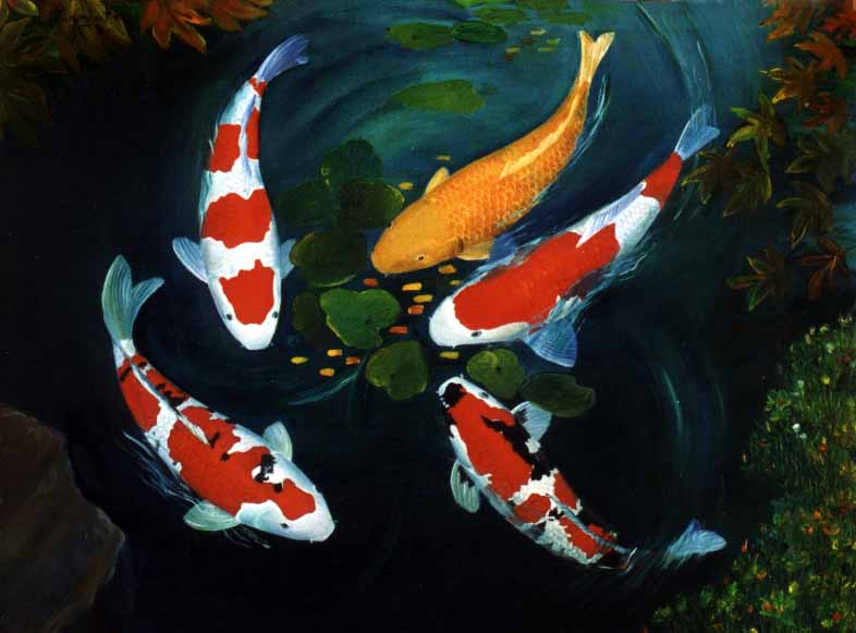 Koi fish fishes world hd images free photos for Coy poisson