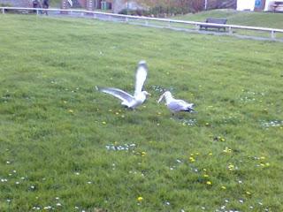 Seagulls Worthing