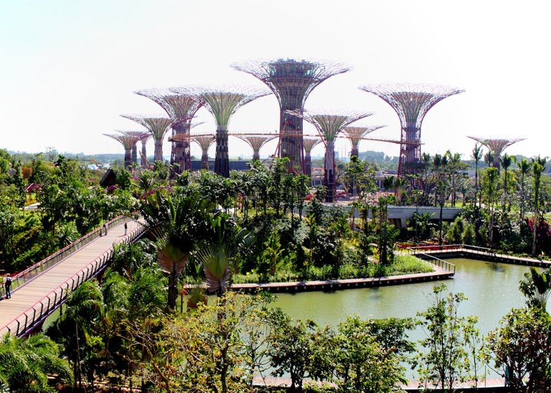 The Garden's own supertrees, ranging between 25m and 50m in height, will also function as receptacles to collect rainwater, provide shade, harvest solar energy and house a bar or F&B outlet.