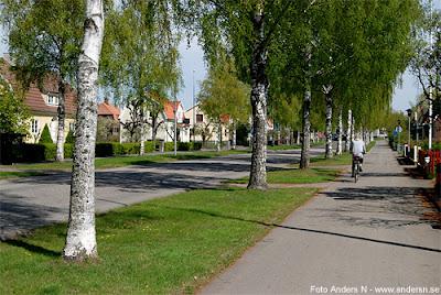 björkarnas stad, tidaholm, inte umeå, björk, björkar, björkallé, foto anders n