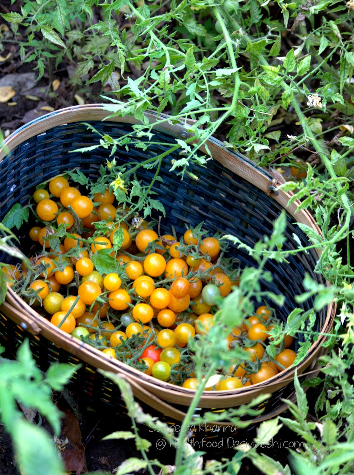 yellow cherry tomatoes and a crust less ricotta quiche recipe with them