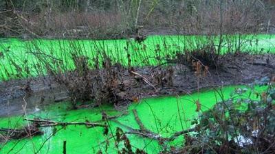 Air sungai yang menakjubkan berwarna hijau neon di kanada (9 gambar