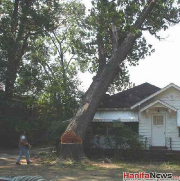 Cara Menebang Pohon Paling Gak Pake Pikiran