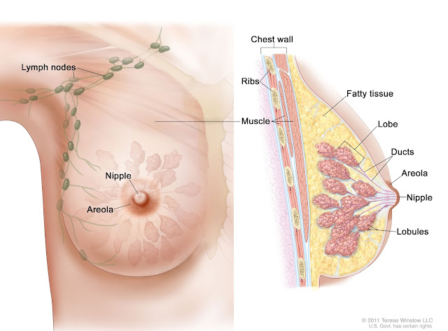 SCIENTISTS DISCOVERED: THESE 2 INGREDIENTS CURE EVEN BREAST CANCER