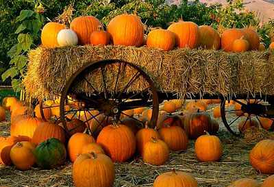 Pumpkin Clipart Picture
