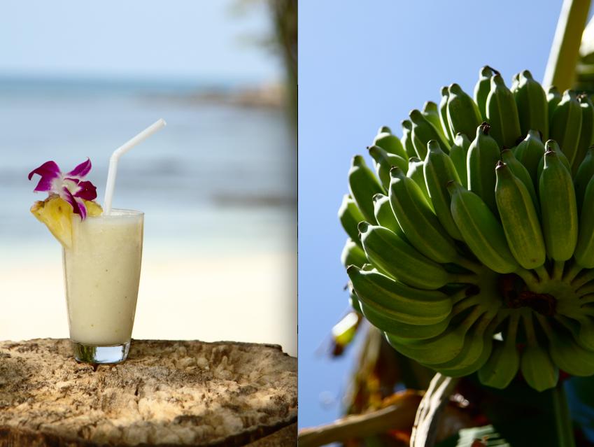 Kokosnuss-Ananas-Banane Shake am Strand und Bananenstauden