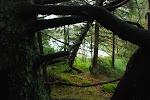 Ett klick för skogen, gratis!