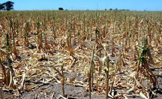Imagen de la Sequía