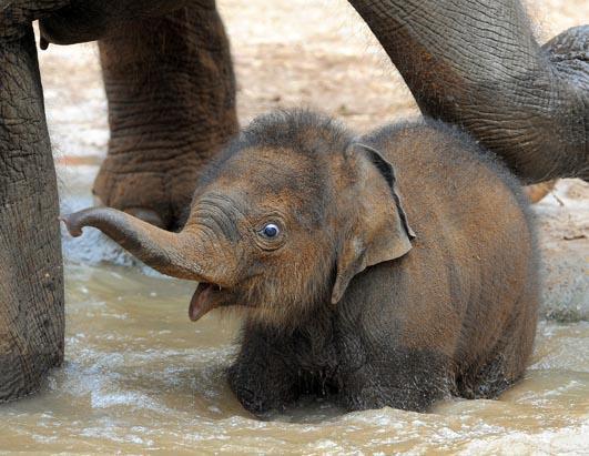 ark for animals zoo babies