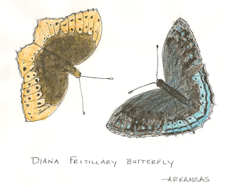 Diana Fritillary Butterfly Male and Female