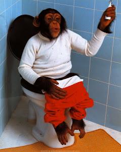 Macaco em...