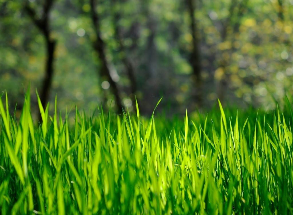 Grass wallpaper, Natural wallpapers, Natural, Green, Others Wallpapers ...