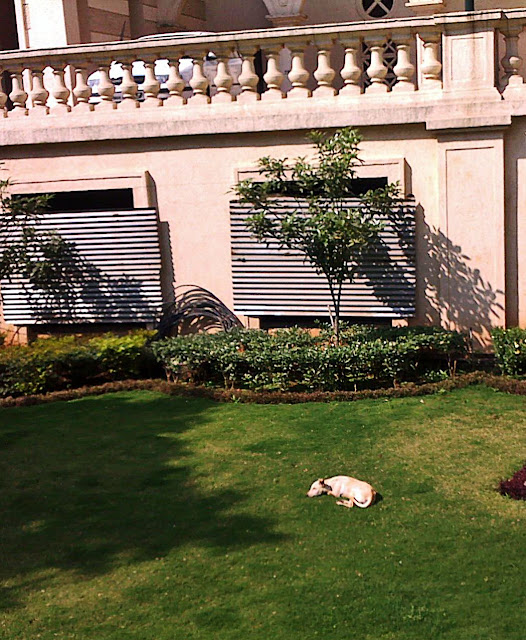 sleeping dog on lawn
