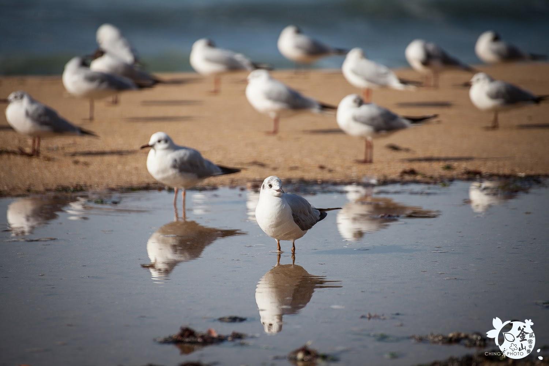 櫻城釜山_5海運台看日出餵海鷗.釜山水族館看水母