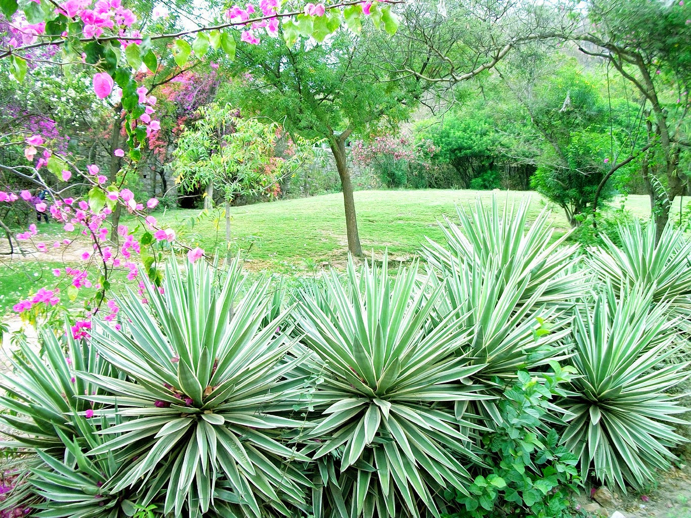 kanak ghati garden jaipur 1