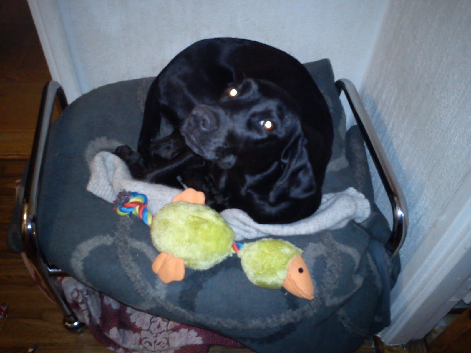 Johanna: januari 2012