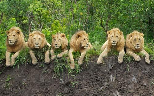 đẹp về động vật hoang dã - xem hình ảnh đẹp hoang dã