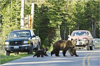 http://1.bp.blogspot.com/-lhscCwUE9cc/TjiPtqrk9UI/AAAAAAAAB_U/OaQjjSkxDpQ/s1600/bears-teton_np.jpg