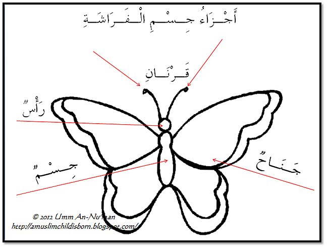 Butterfly parts worksheet - photo#24