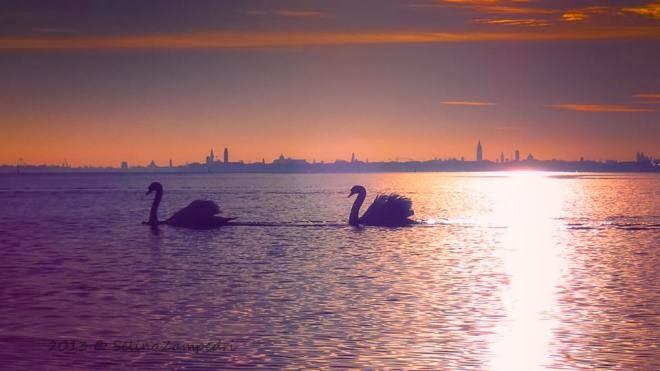 """Grazie a """"Salviamo Venezia"""" per questa foto bellissima e la speranza ivi connessa .."""