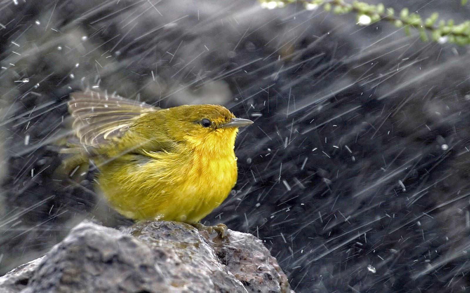 Rainy Shayari SMS In Hindi