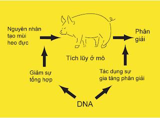 Hình 2: Marker DNA của 32 phân tử liên quan đến Steroid