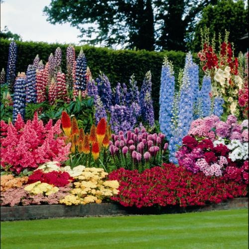 Perennial garden ideas sun native home garden design for Flower garden layout
