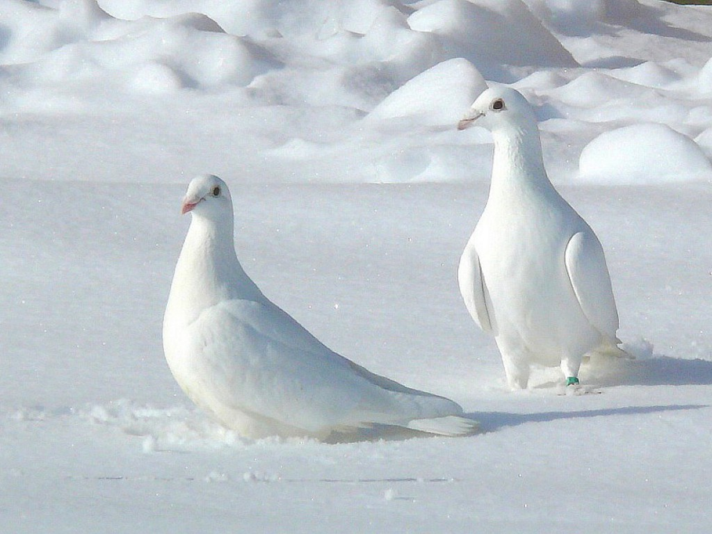 white pigeon Find white pigeon, mi homes for sale, real estate, apartments, condos & townhomes with coldwell banker residential brokerage.